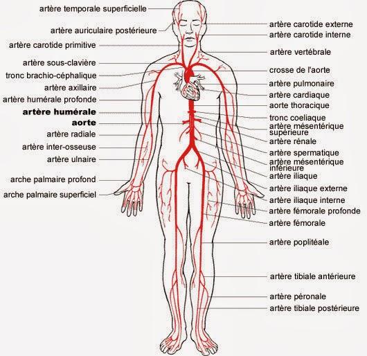 Le traitement de la varicosité par la vitamine vers